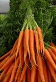 Los manojos de zanahorias frescas de la primavera con verde rematan Imagen de archivo libre de regalías