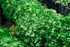 Los manojos frescos cercanos de verdes aromáticos del perejil, coriandro salen del cilantro Fotografía de archivo libre de regalías