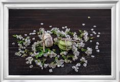 Los mararoons blancos y verdes en poco flor florecen Fotos de archivo