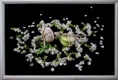 Los mararoons blancos y verdes en poco flor florecen Fotos de archivo libres de regalías
