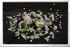 Los mararoons blancos y verdes en poco flor florecen Imagen de archivo libre de regalías