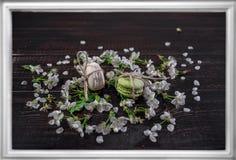 Los mararoons blancos y verdes en poco flor florecen Foto de archivo