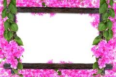 Los marcos de madera de la foto del diseño con las ramas de la flor de la buganvilla son Imagen de archivo