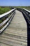 Los marismas de madera del rastro del anhinga de la calzada indican el parque nacional la Florida los E.E.U.U. Imagen de archivo libre de regalías