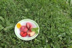 Los melocotones y la fresa maduros que mienten en una placa en una hierba Imágenes de archivo libres de regalías