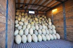 Los melones alargados del Uzbek del cultivar están en el camión fotos de archivo
