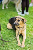 Los metis lindos del perro del refugio con esperanza y el nuevo propietario y él que esperan de la paciencia para tendrán casa Mi Foto de archivo libre de regalías