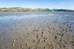 Los millares de cáscaras espirales se arrastran en la playa del fango del humedal en suma Fotos de archivo