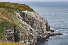 Los millares de pájaros cubren los acantilados al lado del Océano Atlántico fotos de archivo libres de regalías