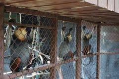 Los monos en el parque zoológico Fotografía de archivo libre de regalías