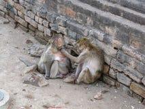 Los monos eran toman cuidado en Phra Prang Sam Yod Imagen de archivo