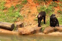 Los monos están sentando el bocado pedido Foto de archivo