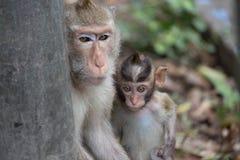 Los monos miman y niño Fotografía de archivo