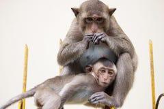 Los monos miman y niño Imágenes de archivo libres de regalías