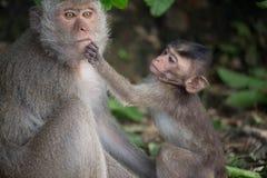 Los monos miman y niño Imagen de archivo libre de regalías