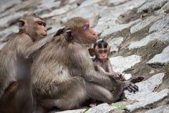 Los monos miman y niño Imagenes de archivo