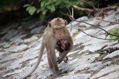 Los monos miman y niño Imagen de archivo