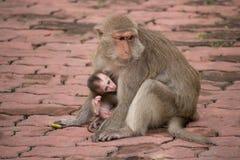 Los monos miman y niño Fotos de archivo