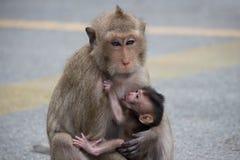 Los monos miman y niño Foto de archivo libre de regalías