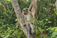 Los monos se sientan y comiendo en el bosque imágenes de archivo libres de regalías