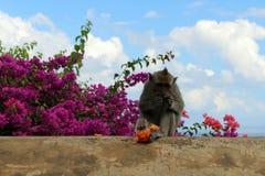 Los monos y los niños que cuelgan alrededor Pura Uluwatu Notorio para imagen de archivo