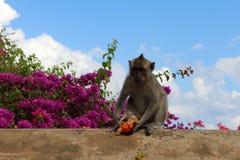 Los monos y los niños que cuelgan alrededor Pura Uluwatu Notorio para imágenes de archivo libres de regalías