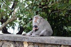 Los monos y los niños que cuelgan alrededor Pura Uluwatu Notorio para fotos de archivo