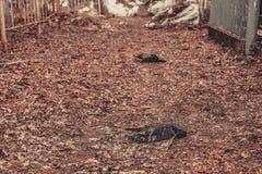 Los monumentos antiguos de las piedras sepulcrales del cementerio de las bebidas espirituosas del fantasma del misterio del misti imagen de archivo libre de regalías