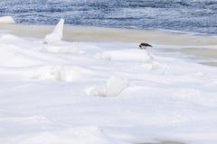 Los morones y las masas de hielo flotante en el río del invierno imagen de archivo