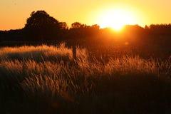 Los mosquitos de baile juegan en la puesta del sol fotos de archivo libres de regalías