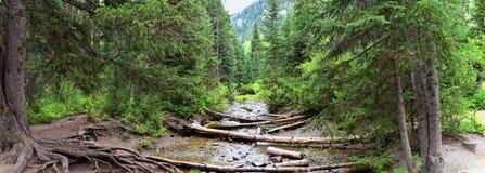 Los Mountain View de la cascada y de la corriente del río de pistas de senderismo al buñuelo bajan en barranco grande del Cottonw foto de archivo libre de regalías