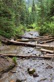 Los Mountain View de la cascada y de la corriente del río de pistas de senderismo al buñuelo bajan en barranco grande del Cottonw fotografía de archivo