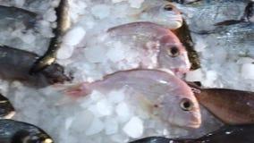 Los movimientos de la cámara a lo largo de una serie de mariscos que se basa sobre el hielo en los pescaderos hacen compras almacen de video