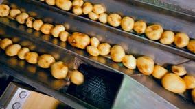 Los movimientos del transportador de la fábrica pelaron las patatas, clasificándolo para la comida almacen de metraje de vídeo