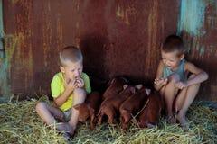 Los muchachos europeos juegan con los cerdos rojos de la raza del Duroc-Jersey Llevado nuevamente imagen de archivo
