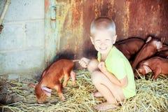 Los muchachos europeos juegan con los cerdos rojos de la raza del Duroc-Jersey Llevado nuevamente foto de archivo