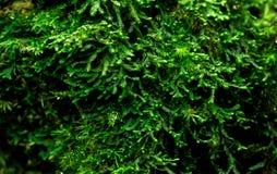 Los musgos cubren con denso en árbol muerto Ambiente verde, naturaleza, ecología, concepto de la biodiversidad Fondo natural foto de archivo libre de regalías