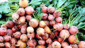 Los nabos son una de las grandes verduras de raíz foto de archivo libre de regalías