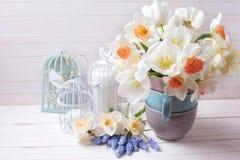 Los narcisos frescos de la primavera, los tulipanes blancos florecen, los muscaries florecen foto de archivo libre de regalías