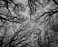 Los nervios fotos de archivo