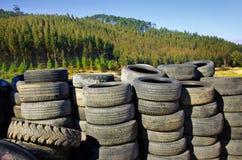 Los neumáticos viejos acercan a árboles Fotos de archivo libres de regalías
