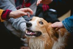 Los niños acarician el perro rojo del collie de frontera Fotos de archivo libres de regalías