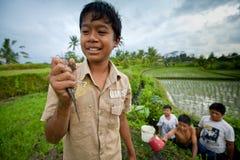 Los niños cogen pequeños pescados en una zanja fotografía de archivo libre de regalías