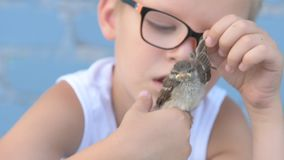 Los niños cogieron el gorrión y lo miraban en sus manos El concepto de respecto por naturaleza y animales almacen de metraje de vídeo