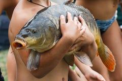 Los niños cogieron una pesca enorme de la carpa y la guardan fotografía de archivo libre de regalías