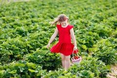 Los niños escogen la fresa en campo de la baya en verano fotos de archivo libres de regalías