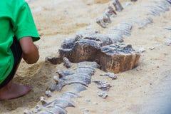 Los niños están aprendiendo el dinosaurio de la historia, excavando la simulación de los fósiles de dinosaurio fotografía de archivo