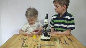 Los niños estudian las plantas debajo de un microscopio en una tabla de madera al lado de una pared blanca metrajes
