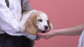 Los niños que juegan con el perrito, animal doméstico de alimentación de la palma abierta, animales aman y cuidan metrajes