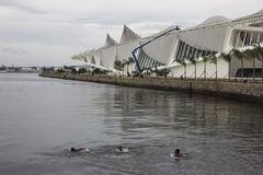 Los niños se bañan en aguas contaminadas de la bahía de Guanabara Imagen de archivo libre de regalías